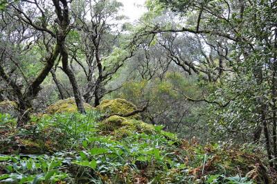 A floresta que nos resta