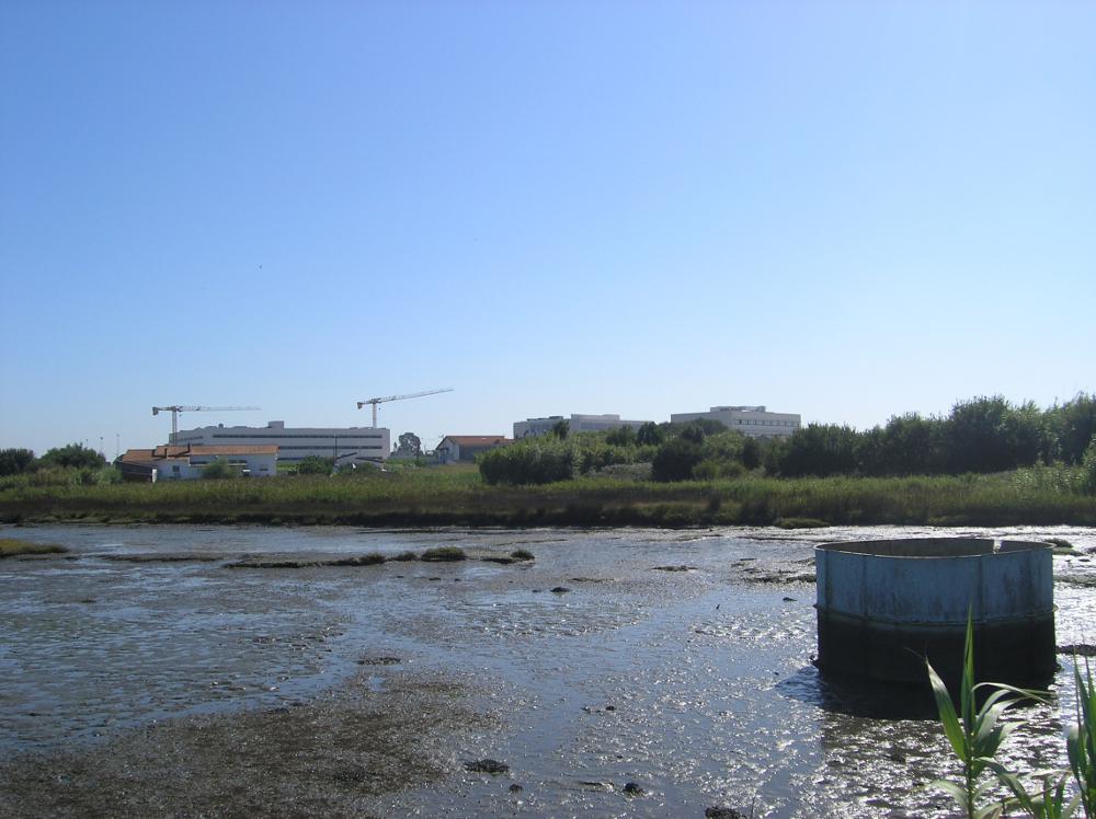 Betão na Ria de Aveiro