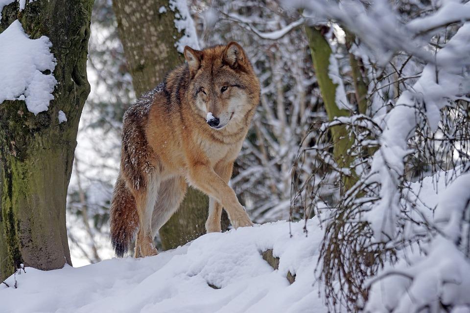 Demasiado civilizados para preservar a vida selvagem